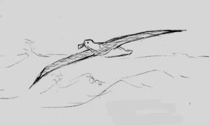 Wandering Albatross Quick Sketch