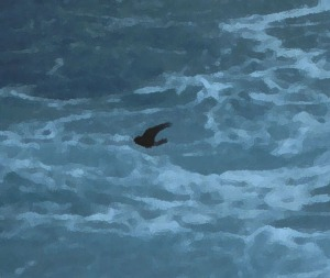 Wilsons StormPetrel Photo Filtered